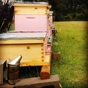 BZ Honey - Our partners benefit from added pollinators and fresh, super-local honey.