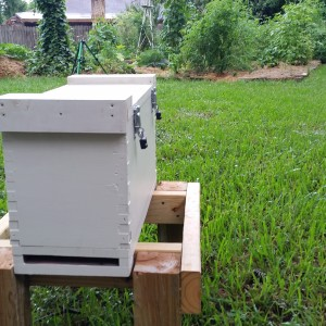 BZ Honey - One of our pollination service hives working in a backyard garden in the NW Houston area.