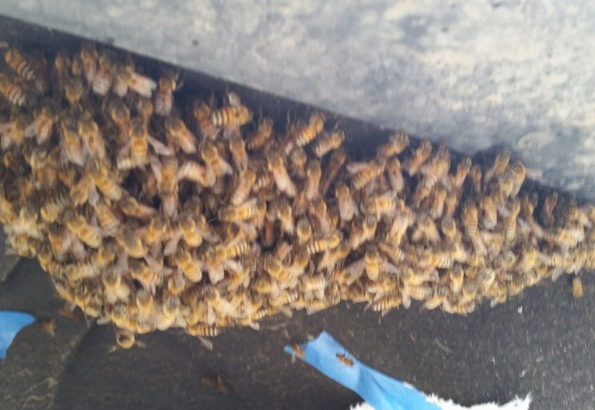 Swarm in the tire well of a truck.
