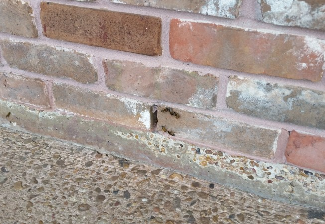 Swarm in a brick wall.  We had to remove this one from the inside.