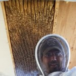 BZ Honey - A very large hive between the rafters of a porch overhang.