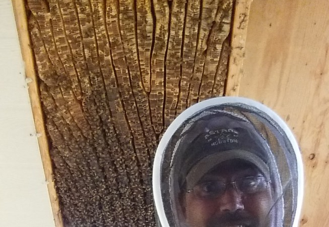 A very large hive between the rafters of a porch overhang.
