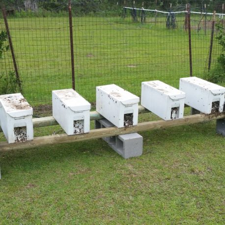 BZ Honey = Your 5 frame nuc will be ready to grow into production hives.