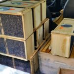 BZ Honey - Packages of bees on their way to the bee yard.