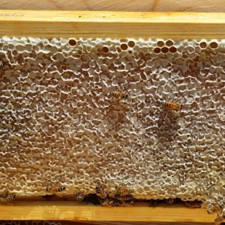 BZ Honey - Our honey extraction service puts your capped honey into bottles for you.