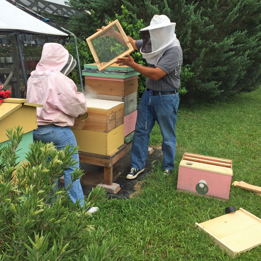 BZ Honey - Inspecting our hives at The Arbor Gate. Photo courtesy of Susan Rushton (https://susanrushton.net/).
