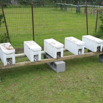 BZ Honey - Your 5 frame nuc will be ready to grow into production hives.