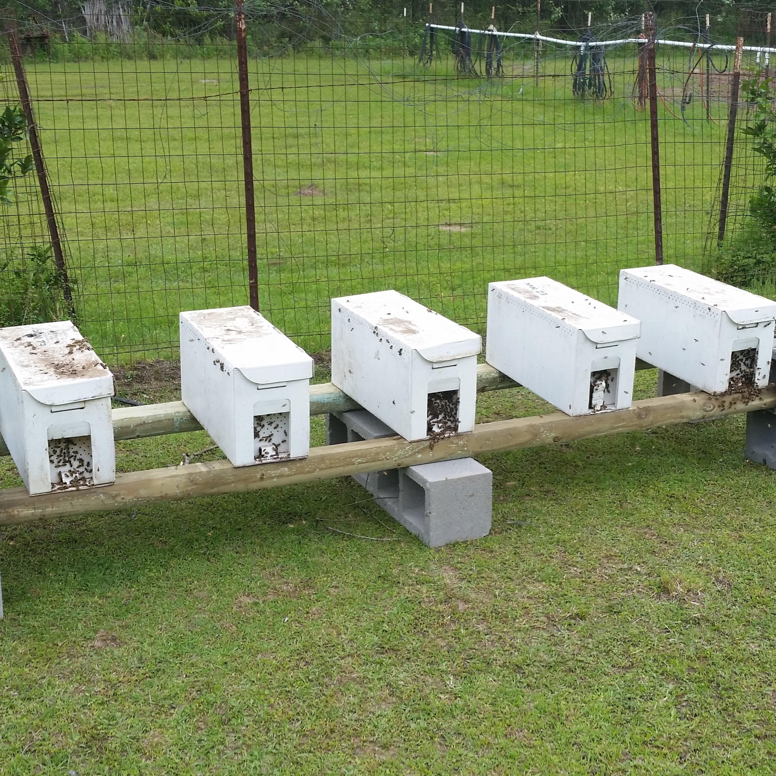 2018 Honey Bee Nuc Bz Honey