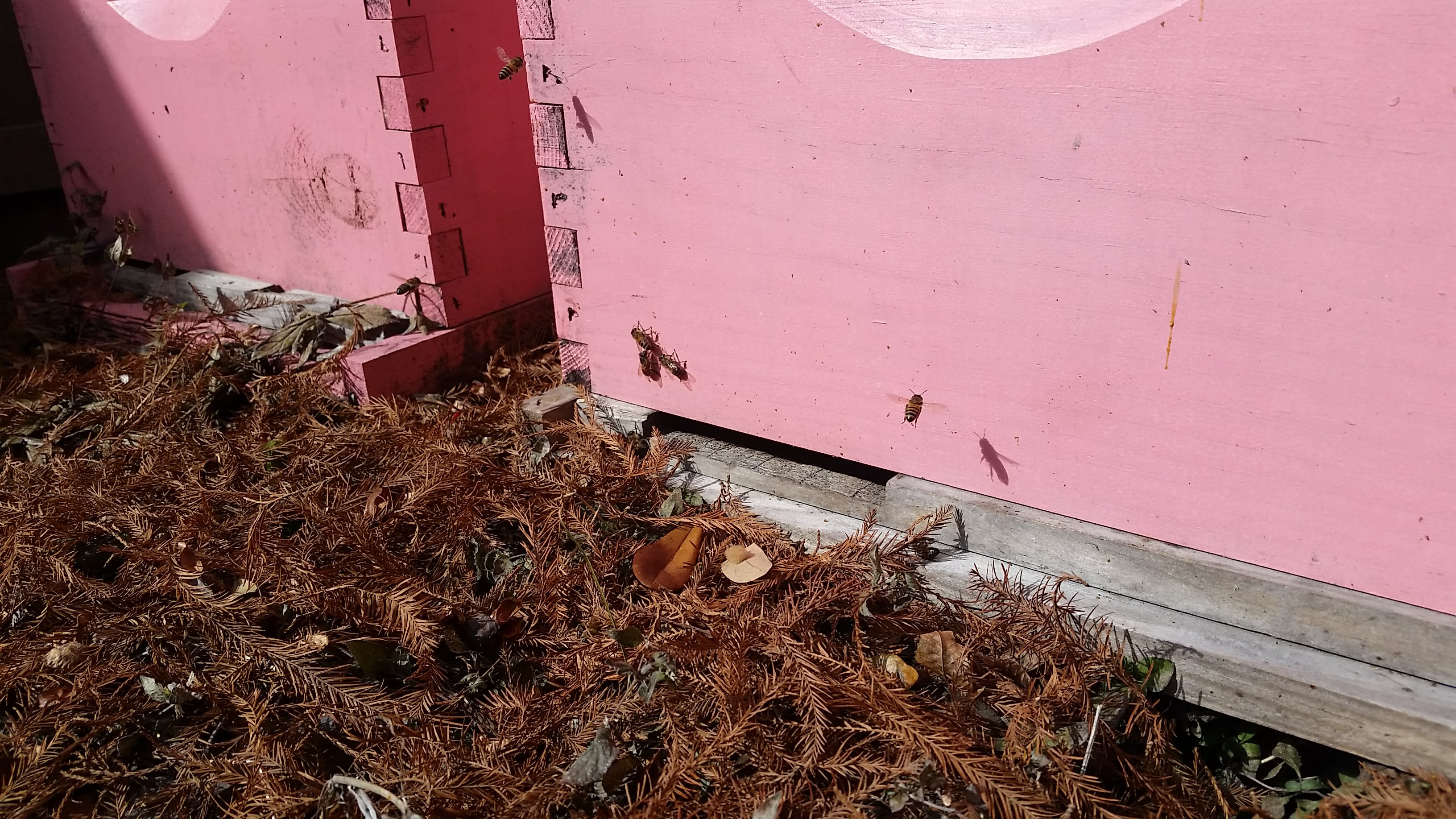 BZ Honey - Our classroom hive at the shop enjoyed a couple hours of winter sunlight.